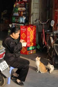 150115ベトナムの猫a.jpg