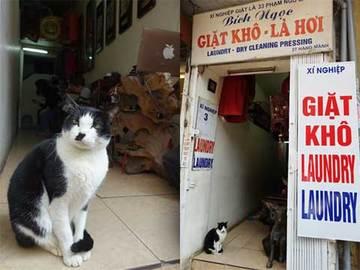 150115ベトナムの猫b.jpg