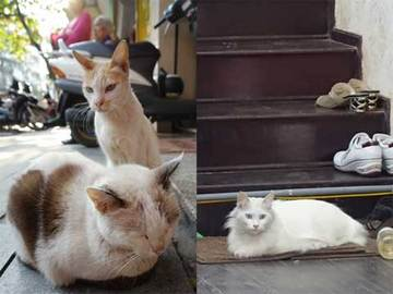 150115ベトナムの猫c.jpg