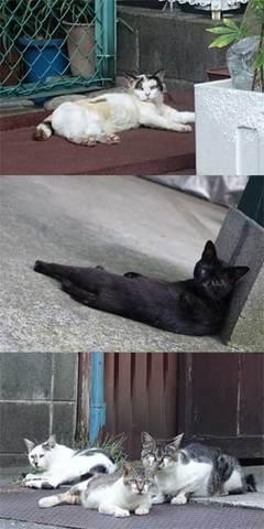 150726猫散歩.jpg