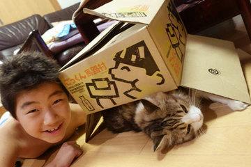 150916きょんの箱家b.jpg