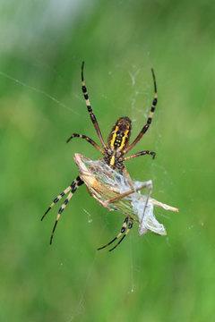 150924お食事中のクモ.jpg