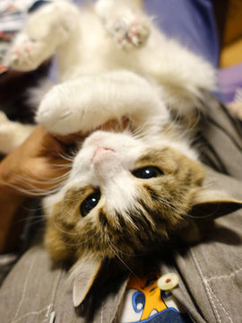 151016猫と戯れる.jpg