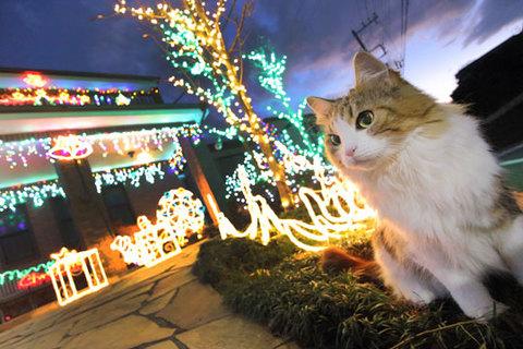 151223クリスマスイルミの家.jpg