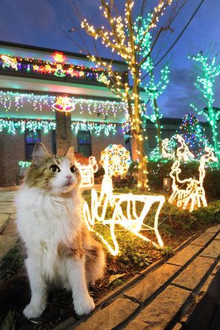 151225クリスマスイルミの家.jpg