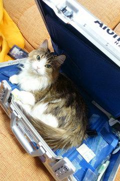 151229スーツケースa.jpg