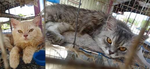 151229ルムッツの猫.jpg