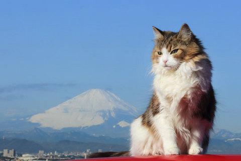 160121富士山ニャa.jpg