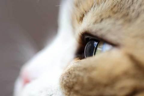 160214繊い瞳.jpg
