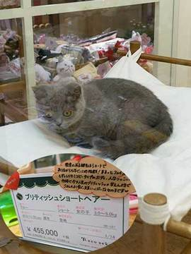 160315高い猫.jpg