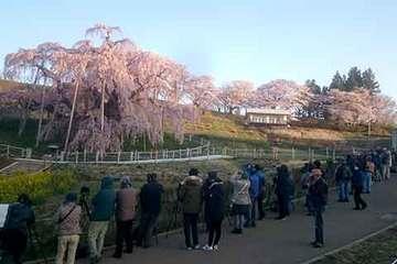 160414滝桜カメラマニア.jpg