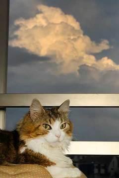 160717積乱雲a.jpg