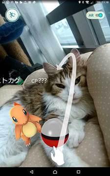 160723ポケモンgob.jpg