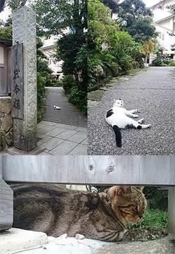 160828江の島猫a.jpg