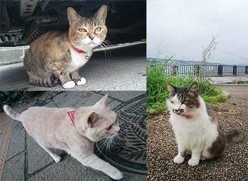 160828江の島猫b.jpg