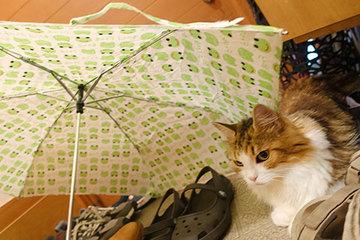 160830傘が好き.jpg