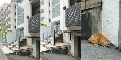 160929市ヶ谷の猫.jpg