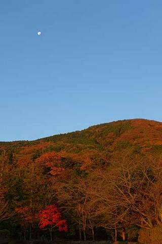 161118朝陽に照らされた紅葉.jpg