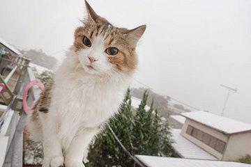 161124雪a.jpg