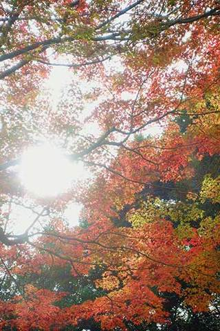 161128昭和記念公園b.jpg
