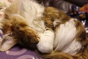 170222の猫の日.jpg