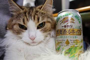170324若葉ビール.jpg