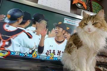 170401プロ野球開幕a.jpg