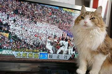 170401甲子園優勝.jpg