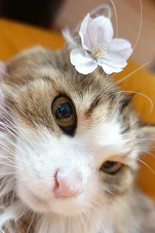 170407桜をきょんにa.jpg