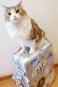 170503スーツケース.jpg