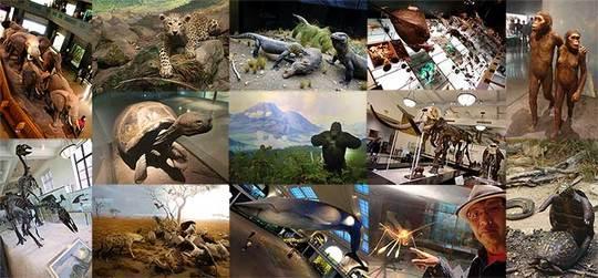 170513自然歴史博物館c.jpg