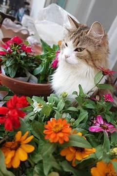 170612花植えa.jpg