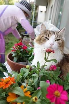 170612花植えb.jpg