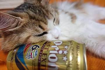 170712ビール枕a.jpg