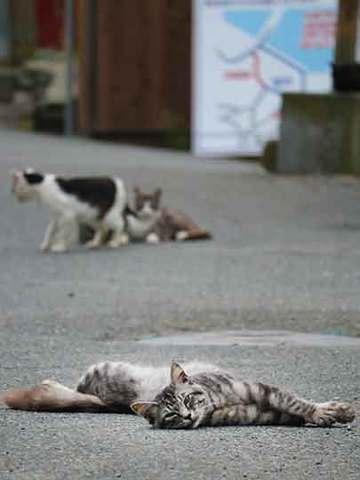 170730田代島の猫.jpg