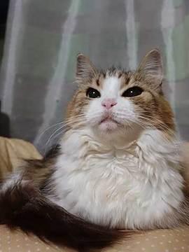 171004箱猫.jpg