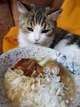 171018猫好き用ラーメンb.jpg