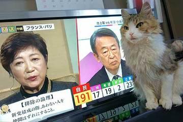 171022選挙速報.jpg