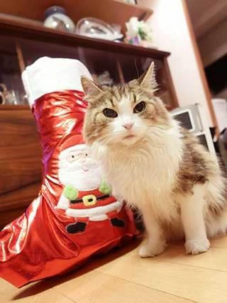 171225クリスマスソックスa.jpg