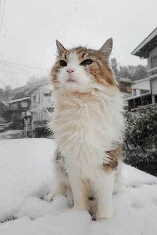 180122雪だニャb.jpg