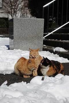 180127新宿の猫.jpg