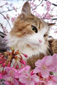 180226川津桜a.jpg