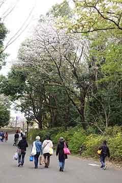 190415桜c.jpg