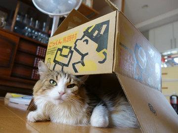 150916きょんの箱家a.jpg