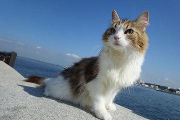 160808江の島夏のお嬢さん.jpg