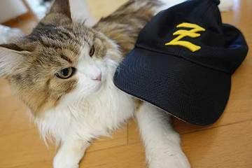 170220野球帽b.jpg