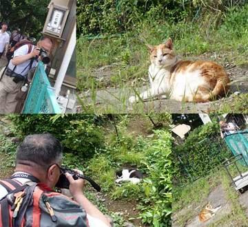170527江の島猫撮影.jpg