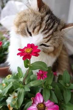 170612花植えc.jpg