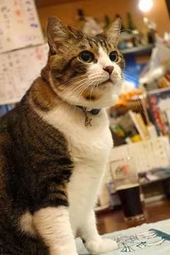 171014看板猫.jpg