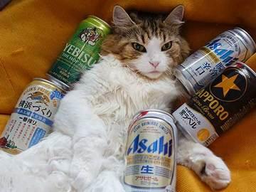 180519限定ビール.jpg